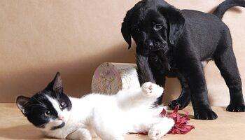 Содержание домашних собак и кошек. Новые правила.