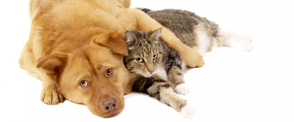 Содержание домашних собак и кошек