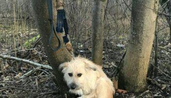 Удивительная история спасения собаки